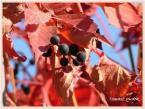"""TomD """"Kolory jesieni"""" (2006-03-01 18:19:13) komentarzy: 2, ostatni: A to czemu? Jeśli zdjęcie dobre, to warto je pokazać. To napewno nalezy do udanych!"""