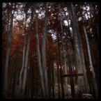 """DELF """"modlitwa drzew"""" (2006-03-03 18:31:20) komentarzy: 26, ostatni: klimacik robi swoje:)"""