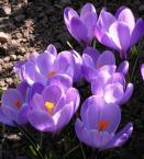 """marco42 """""""" (2006-03-09 08:58:55) komentarzy: 7, ostatni: ładnie wiosennie"""