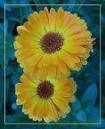"""bara """"blizniaki c.d."""" (2006-03-14 22:06:35) komentarzy: 40, ostatni: kwiatki tez wychodza Ci dobrze:)"""