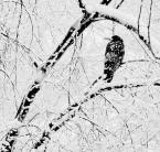 """borQT """"niet vodki, niet kominka i w dodatku ziarno dzielą kaczki ..."""" (2006-03-19 21:03:03) komentarzy: 3, ostatni: przekażę gawronowi :P"""