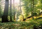 """Wilkowaty """"Las nagły, niespodziany, zapomniany las..."""" (2006-03-20 21:30:05) komentarzy: 24, ostatni: iść w stronę słońca..."""