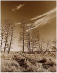 """LeszeK """"ponidzie III"""" (2003-03-31 11:13:24) komentarzy: 17, ostatni: pieknie ..te drzewa tak jakby chciały za chmurami...Pozdr."""