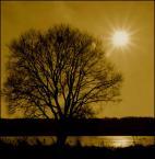 """irmi """"supernova"""" (2006-03-26 09:41:48) komentarzy: 5, ostatni: ciepłe, takie oliwkowe"""