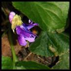 """Franco Zarrazzo """"17 mgnień wiosny - cd..."""" (2006-03-28 23:10:50) komentarzy: 8, ostatni: ładne kolorki:)))"""