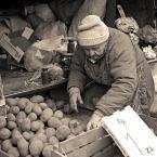 """sandiego """"kiełkujące po złociszu"""" (2006-03-30 18:53:41) komentarzy: 35, ostatni: poznaje, to pani Marysia, miala najlepsze ziemniaki ;) to już historyczna fota ..."""