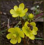"""Żaba-Ewa """"Wiosenna symbioza"""" (2006-03-31 19:34:43) komentarzy: 32, ostatni: b ladne takie delikatniutkie;-)"""