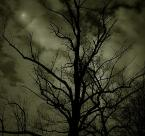 """nicy """"night visions"""" (2006-04-02 12:11:25) komentarzy: 26, ostatni: niezła fota"""