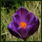 """beige """"... zaproszenie ..."""" (2006-04-05 20:17:05) komentarzy: 68, ostatni: Kielich, nieśmiało zaglądam do niego...jest, wreszcie znajduję....piękno.......świattna wizja....."""