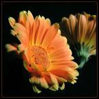 """beige """"... kłótnia ..."""" (2006-04-11 21:24:10) komentarzy: 79, ostatni: Bardzo eleganckie, + za tytuł i opis..."""