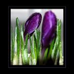 """Ungirith """"wiosennie"""" (2006-04-14 13:29:27) komentarzy: 13, ostatni: piękne, takie krystaliczne"""