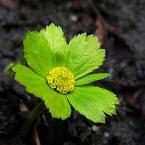 """HEJA """"W poszukiwaniu wiosny 4"""" (2006-04-14 21:28:30) komentarzy: 41, ostatni: piękna roślinka :) nie znałam jej dotąd .. a fotka poprostu super :)"""