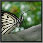 """Aga78 """"IDEA LEUCONE"""" (2006-04-16 20:39:28) komentarzy: 109, ostatni: Co wy w tym widzicie????????????"""