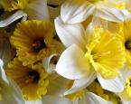 """Anavera """"Wiosna raz"""" (2006-04-20 18:21:04) komentarzy: 19, ostatni: Ładna kompozycja."""