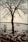 """LB """"Bez tytułu [07]"""" (2006-04-27 07:11:43) komentarzy: 10, ostatni: Podoba mi się zestawienie liszajowatości topniejącego śniegu z rozczochraną koronką gałązek oczekujących na listki. :)"""