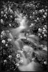 """LinKuei """"Wiosna"""" (2006-04-27 18:11:37) komentarzy: 14, ostatni: bw tez fajne... wstazeczka plynna :)"""