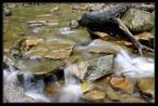 """Marcin Z """"Strumyk"""" (2006-05-03 20:11:11) komentarzy: 4, ostatni: dobrze zrobnione. acz tak ot ;) ładna woda, fajny pień. kropka. pozdr :)"""