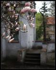 """black_bird """"Magnolia"""" (2006-05-07 23:12:03) komentarzy: 44, ostatni: ..juz tesknie za tym widokiem"""