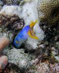 "Luhan ""Blue ribbon eel"" (2006-05-09 22:36:18) komentarzy: 8, ostatni: Piękna... :)"
