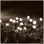 """MonikaMM """"wiosna"""" (2006-05-10 07:48:26) komentarzy: 39, ostatni: Takie ponure i takie zywe jednoczesnie. Fajnie pomyslane. pozdrawiam"""