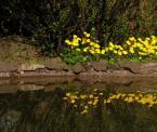 """dyzio1 """"wiosna w ogrodzie botanicznym"""" (2006-05-10 23:15:14) komentarzy: 3, ostatni: a dla mnie fajne. kwiatuszki przeglądają się w wodzie, takie wiosenne"""