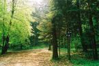 """Zeberka155 """"Wiosna w lesie"""" (2006-05-12 23:21:52) komentarzy: 3, ostatni: bardzo spokojne w odbiorze. Zapraszam na moje wiosenne bagna - 908811"""