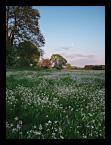 """marek2112 """"majowa łąka"""" (2006-05-13 08:27:48) komentarzy: 63, ostatni: widzę, że lubicie jak kwitnie; pozdrawiam :)"""