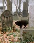 """Wilkowaty """"A życie trwa..."""" (2006-05-23 21:19:27) komentarzy: 45, ostatni: Ładne."""