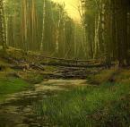 """kinuk """""""" (2006-05-24 18:51:35) komentarzy: 19, ostatni: Przyciemnilem sobie monitor... I są teraz światla w trawach i wodzie.  Pozdrawiam !!! :-)"""