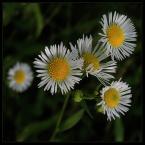 """beige """"... niepozornie...."""" (2006-06-02 20:25:32) komentarzy: 86, ostatni: Jeżeli to foto ma taką średnią, to tylko potwierdza jakie towarzystwo wzajemnej adoracji tu panuje. Niestety, ale to jest bardzo słabe foto."""