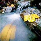 """Supeu """"jesiennie..."""" (2006-06-03 11:54:19) komentarzy: 24, ostatni: urocze :)"""