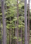 """dorotanna """"wiosna na Chojniku"""" (2006-06-04 18:11:31) komentarzy: 9, ostatni: lubię takie klimaty"""
