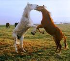 """Wilkowaty """"Starcie Tytanów...?"""" (2006-06-14 15:49:10) komentarzy: 73, ostatni: Poza koni bardzo fajna, mogłoby być lepsze jakościowo"""