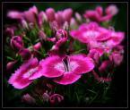 """beige """"... słodycz ..."""" (2006-06-17 21:26:03) komentarzy: 120, ostatni: Cudowne:)pzdr"""