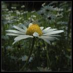 """beige """"... lśnienie ..."""" (2006-06-22 21:29:56) komentarzy: 103, ostatni: jeden z wielu ...."""