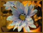 """matka_Wariatka """"niebieski"""" (2003-05-01 20:35:09) komentarzy: 12, ostatni: NIEBIESKI?! ja bym powiedziała że wręcz tęczowy!"""