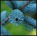 """Adam Pol """"Butelkowa szczotka przyrody."""" (2006-09-13 21:10:27) komentarzy: 69, ostatni: bardzo piękne"""