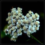 """beige """"... prostota ..."""" (2006-10-04 21:07:46) komentarzy: 76, ostatni: sporo kwiatÓF w tym folio :)"""
