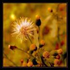 """deksio """"Złota jesień"""" (2006-10-14 18:53:34) komentarzy: 19, ostatni: świetna tonacja kolorystyczna pzdr"""