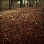 """DELF """"historie samotności"""" (2006-10-14 23:05:34) komentarzy: 37, ostatni: przychodzę tu często, ma w sobie coś magnetycznego"""