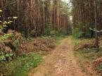 """poprostuprzemo """"W lesie"""" (2006-10-15 15:09:32) komentarzy: 9, ostatni: hm, taki leśny bałagan ciężko sensownie i ładnie sfocić, w naturze jest fajnie a na zdjęciu wychodzi zielona plama"""