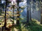 """Ania P """"tatrzański las jesiennym rankiem"""" (2006-10-15 16:05:35) komentarzy: 14, ostatni: @Witold, r00tek - toż napisała, że jest to las tatrzański a nie widok szczytów Tatr... chyba się czepiacie dla samego czepiania..."""