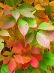 """HOJA 104 """"jesień idzie przez park"""" (2006-10-19 22:05:15) komentarzy: 11, ostatni: idzie jesien pelną parą....ladne jest ,pozdrawiam"""