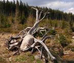 """dorotanna """"rzeźba natury"""" (2006-10-20 19:18:44) komentarzy: 21, ostatni: tak jakby w górach izerskich lub karkonosze"""