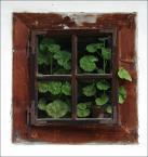 """Adam Skotarczak """"Pelargonie"""" (2006-10-22 18:07:38) komentarzy: 13, ostatni: super- pozdrawiam"""