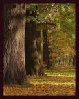 """ilcia """"..."""" (2006-10-26 15:19:01) komentarzy: 40, ostatni: piękna jesień +++"""