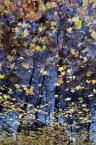 """Gardaś """"jesienne piękno"""" (2006-10-26 22:43:49) komentarzy: 20, ostatni: efekt kosmiczny i pomysł"""
