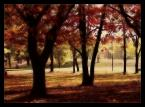 """tasso """"Żółto-czerwono"""" (2006-10-27 00:33:01) komentarzy: 4, ostatni: podoba się pozdrawiam i zapraszam"""