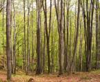 """dorotanna """"trochę wiosny jesienią"""" (2006-10-27 10:55:19) komentarzy: 9, ostatni: za poprzednikami"""