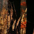 """Ravkosz """"malowanka jesienna #2"""" (2006-10-31 20:46:38) komentarzy: 46, ostatni: przyjemna ta seryjka :)"""